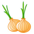 onions isolated illustration