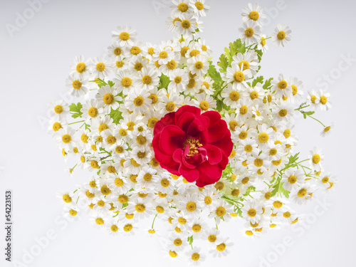 blossom with a red rose on a white background