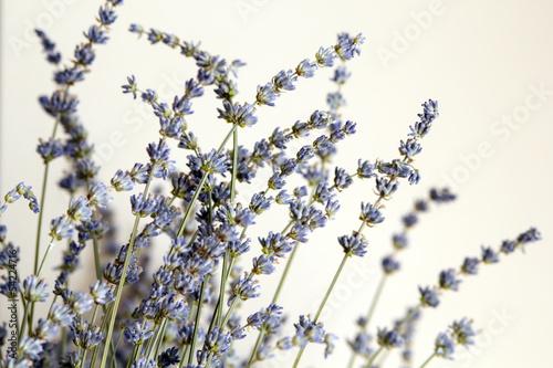 Staande foto Lilac lavender