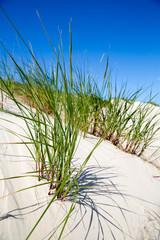 Dünengrass in den Dünen von Norderney, Deutschland
