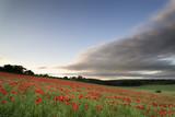 Stunning poppy field landscape under Summer sunset sky