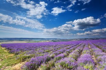 landscape with field of lavender. Crimea.