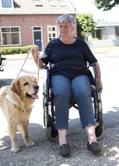 Guide dog  with wheelchair