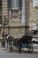 Horse carriage in Palermo
