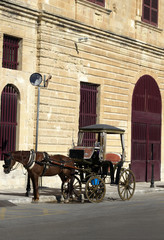 Horse carriage in Malta