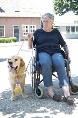 Guide dog won a golden medal