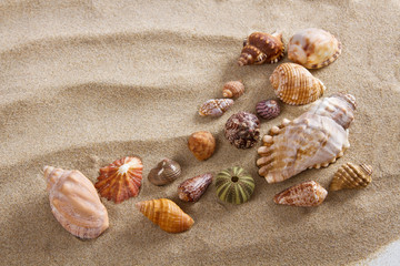 Sea shells in studio