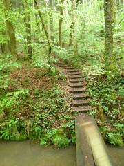 Naturbrücke mit Treppe im Wald