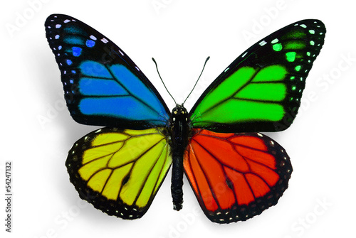 butterfly with fantasy colours