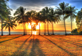sunlight rising behind palm trees in HDR picture of Port Douglas
