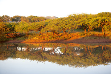 Bushveld Dawn