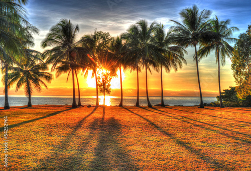 Aluminium Australië sunlight rising behind palm trees in HDR picture of Port Douglas