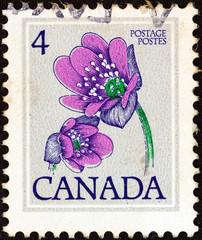 Hepatica flower (Canada 1977)