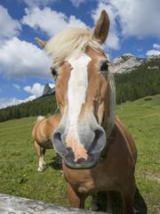 Cavallo alla moda