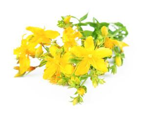 Herbal medicine hypericum