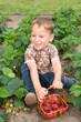 Kleiner Junge im Erdbeerbeet