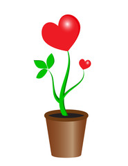 Plant heart in the pot