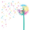 Blow dandelion vector abstract background concept