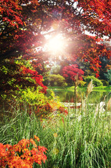 sunny environment