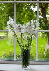 bell-flowers on window-sill