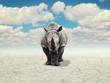 rhino in a desert