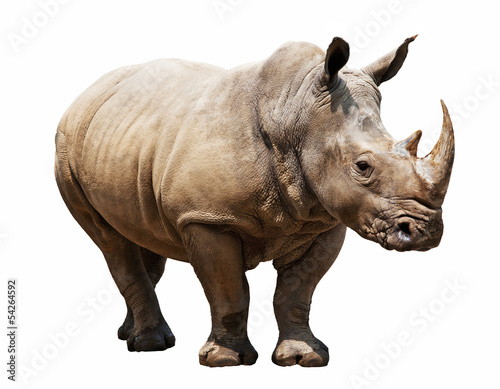 Foto op Canvas Neushoorn rhino on white background