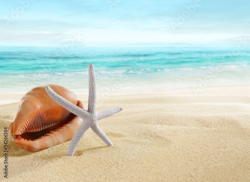 Big shell and starfish on beach.