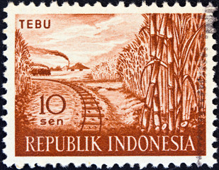 Sugar cane (Indonesia 1960)