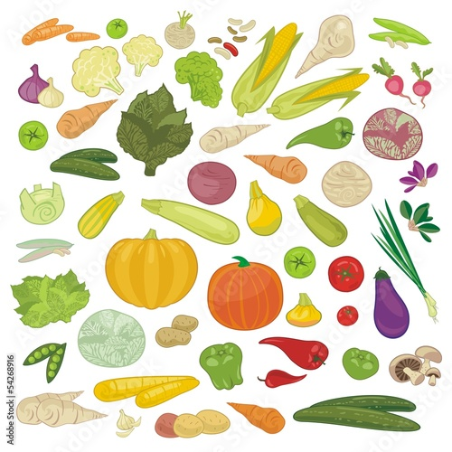 Various Vegetables Set