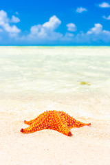 Colorful sea star in the shore of a turquoise sea