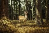 Deer - 54270740