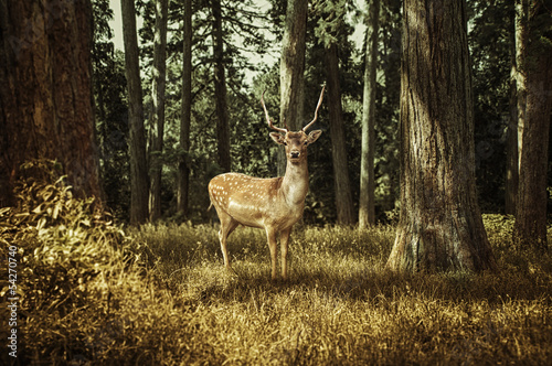Foto op Canvas Ree Deer