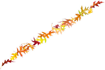 Line of autumn leaves isolated on white