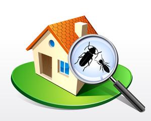 Maison - Termites capricornes