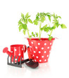 Young plant in bucket isolated on white