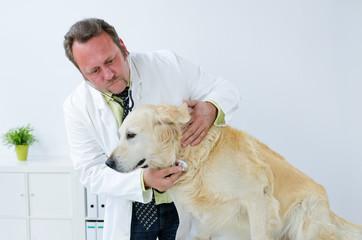 freundlicher tierarzt horcht hund ab