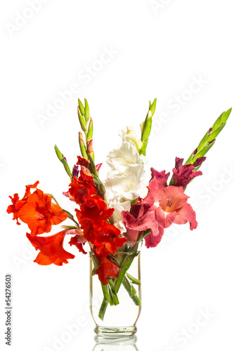 red and white gladioli in a vase