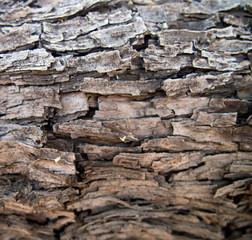 Velvet Mesquite Pattern