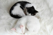 Two sleeping little kitten on white carpet