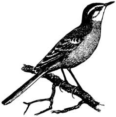 Bird Yellow Wagtail
