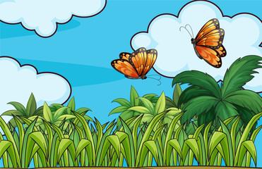 Butterflies flying in the garden