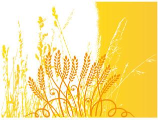Getreide, Korn, Ähren, Kornfeld, Hintergrund