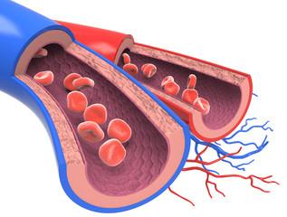 Arterias y Venas