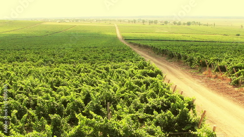Vineyard timelapse