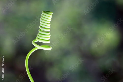 Curled tendril of a plant