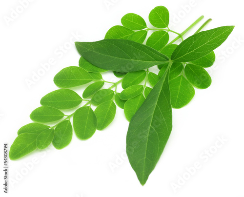 Medicinal vitex negundo with moringa leaves