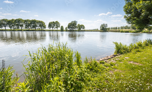 At the banks of a Dutch pond in spring