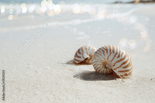 nautilus shell  in blue sea wave, shallow dof