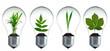 Pflanzen wachsen in Glühbirnen - 54314756