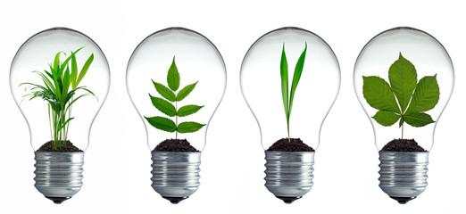 Pflanzen wachsen in Glühbirnen